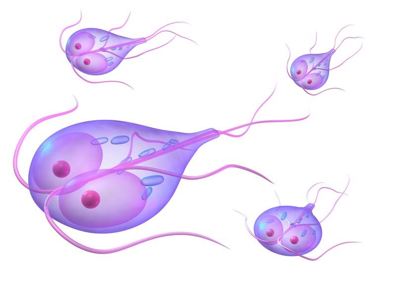 giardia symptoms after antibiotics)