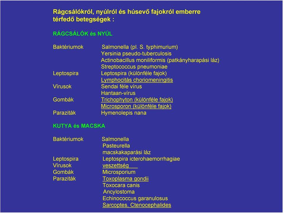 aszcariasis antroponózis)