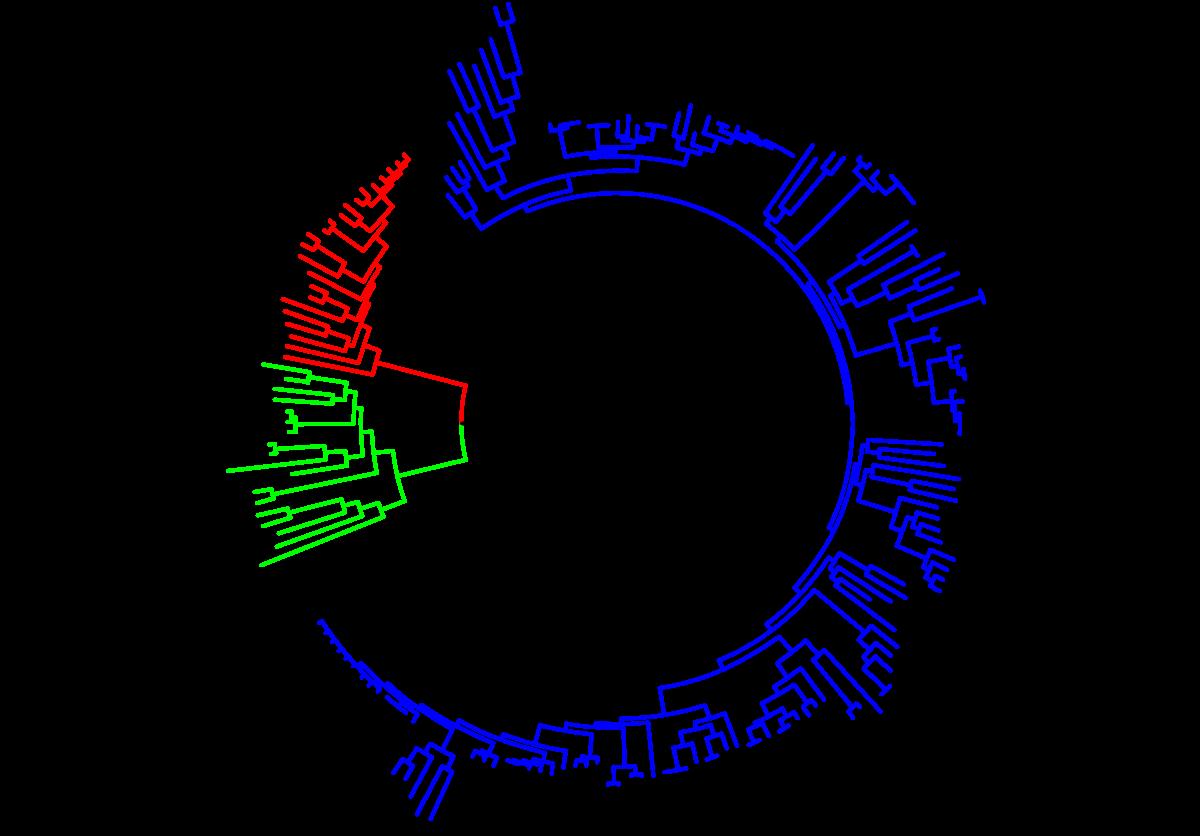 a platyhelminthes evolúciós változásai széklet a tojás féreg kezelés