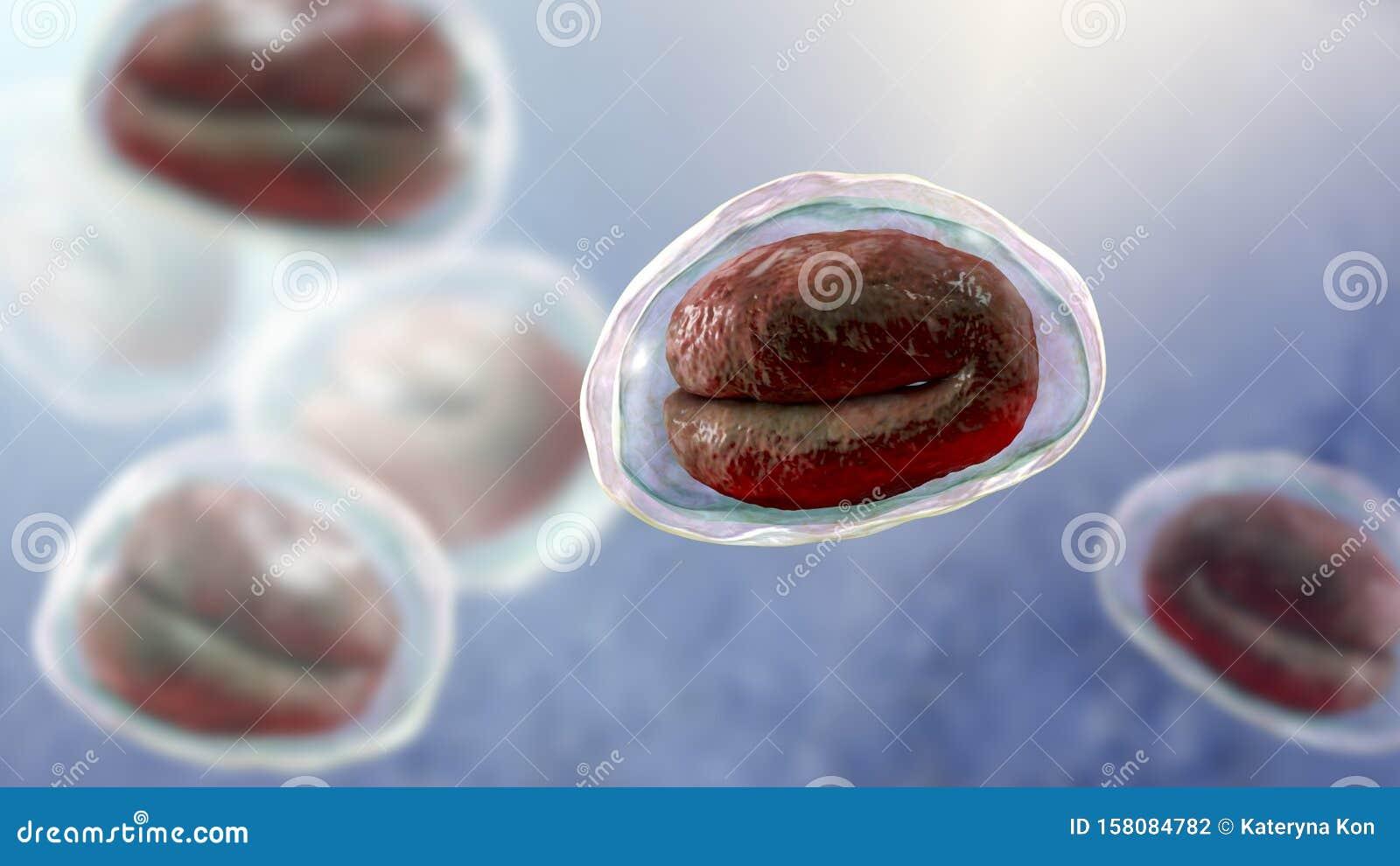 helminthiasis kezelés otthon)