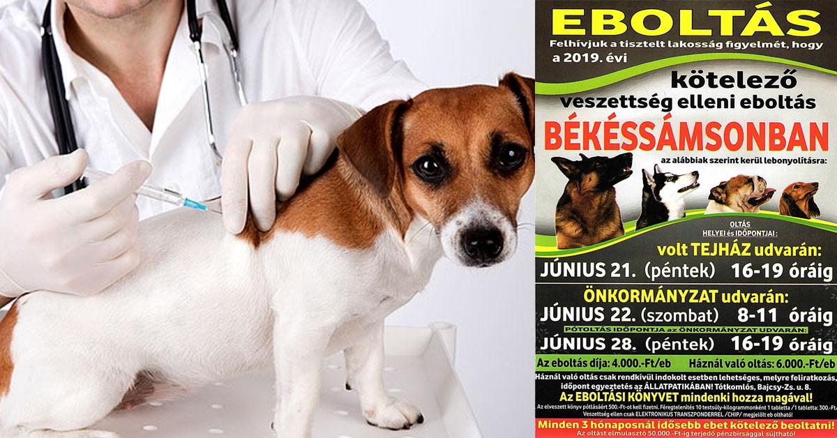 Kötelező és javasolt oltások kutyáknak
