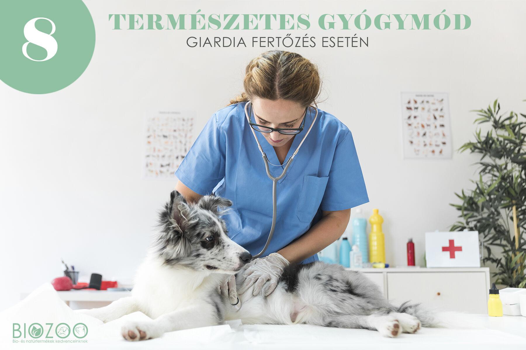 giardia kezelése)