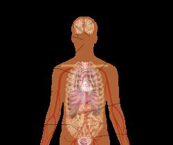 paraziták tünetei nhs