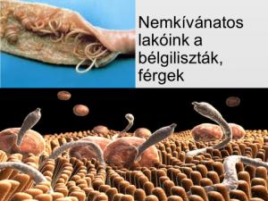 szalag parazita féreg és toxoplazma kezelés
