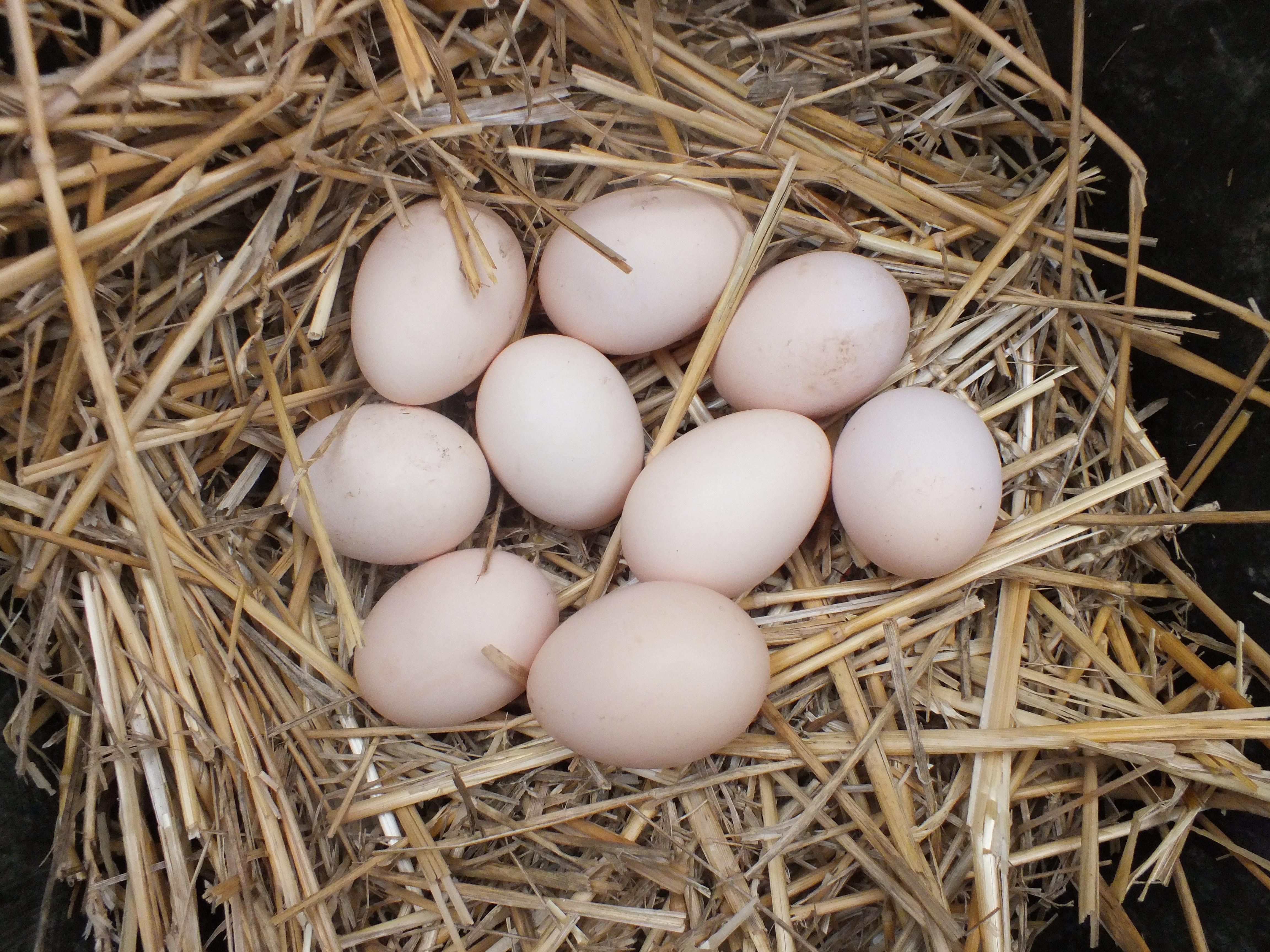 citilab tojás féreg