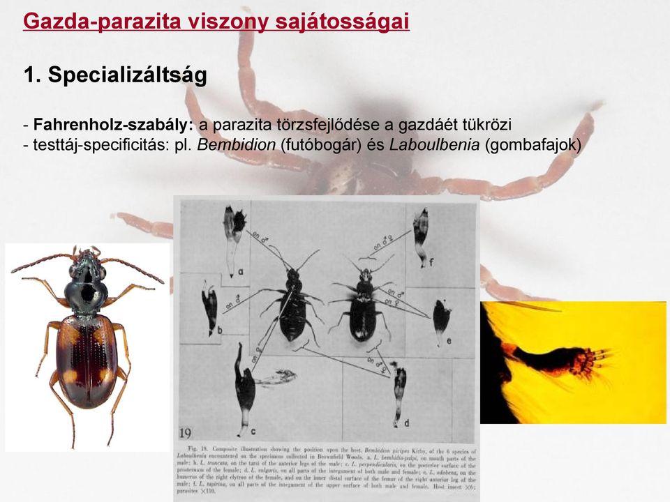 Metazoan paraziták példák, Élősködő – Wikipédia