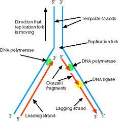 strongyloidosis spirál férgek gyermekeknél a kezelés során