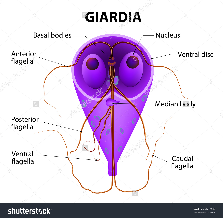 parazita fertőzés tünetek kezelése)