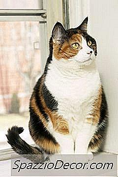 Sufletelele Codrutei au nevoie de ajutor! - Simptome giardia pisici