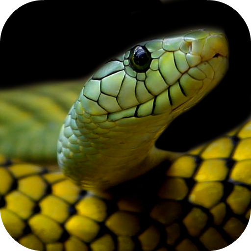 Brutális: több mint 500 kullancsot szedtek ki egy óriáskígyóból Ausztráliában
