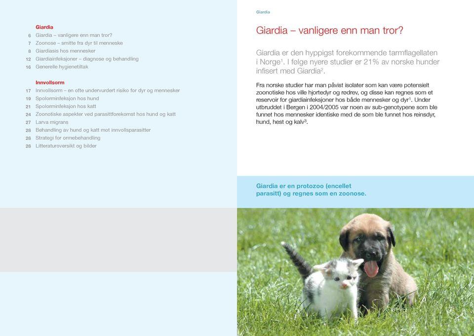 giardia behandling katt)