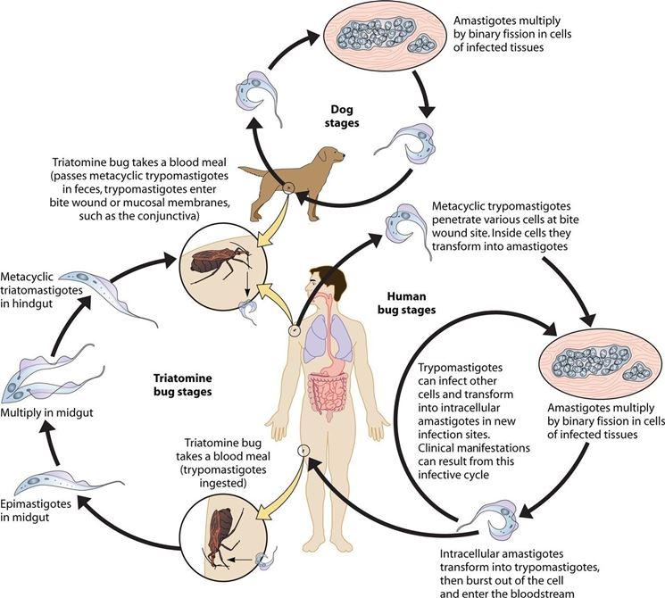 mérgezett mítosz vagy valóság az aceton szaga egy felnőtt ok szájából