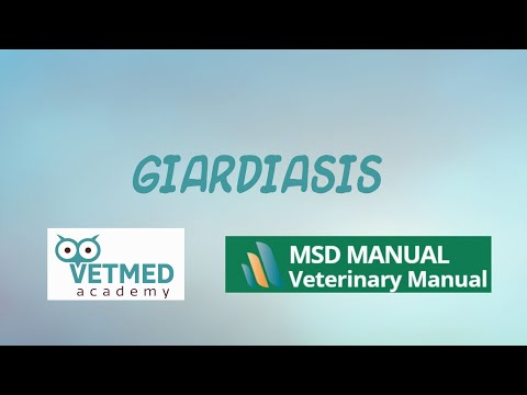 Giardiasis kezelési fórum