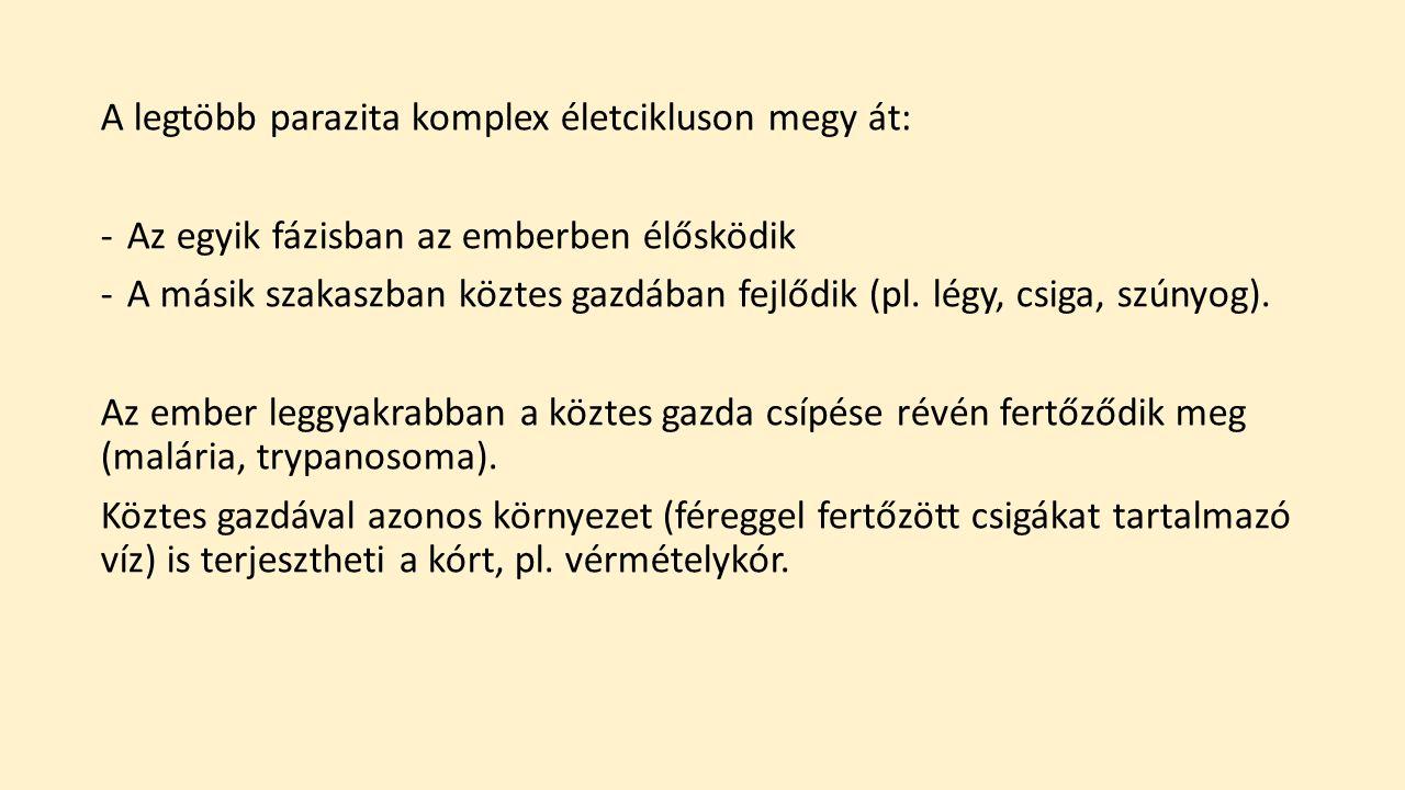 protozoan paraziták az emberben)
