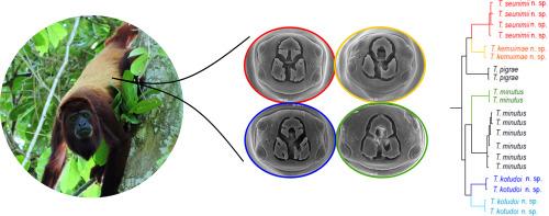pinworm biológia