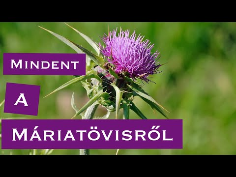 paraziták a máj gyógynövényes kezelésében)