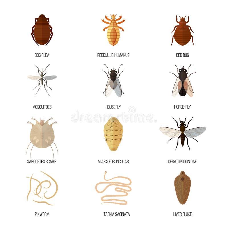 a pinworms higiéniai szabályai
