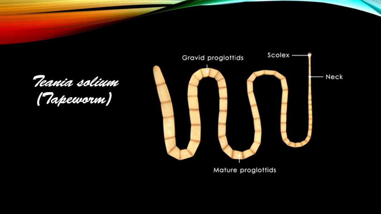 Széles spektrumú gyógyszer helmintákhoz, Opisthorchiasis gyógyszer