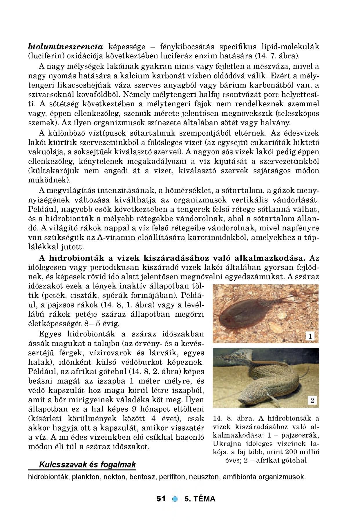Sebők Zoltán: Parazita kultúra