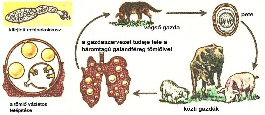 laposférgek paraziták)