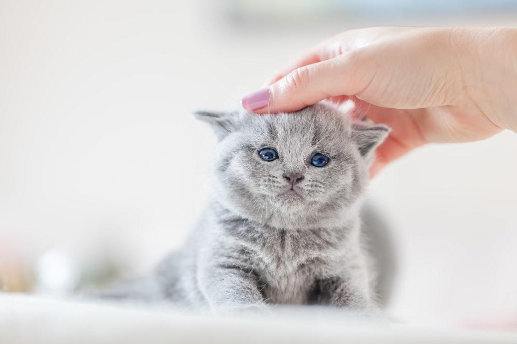 egy macska injekciója férgektől)