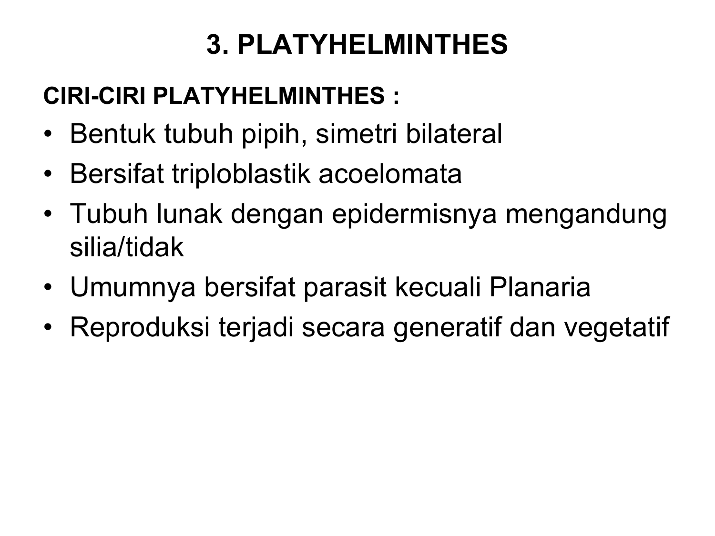 kelas filum nemathelminthes
