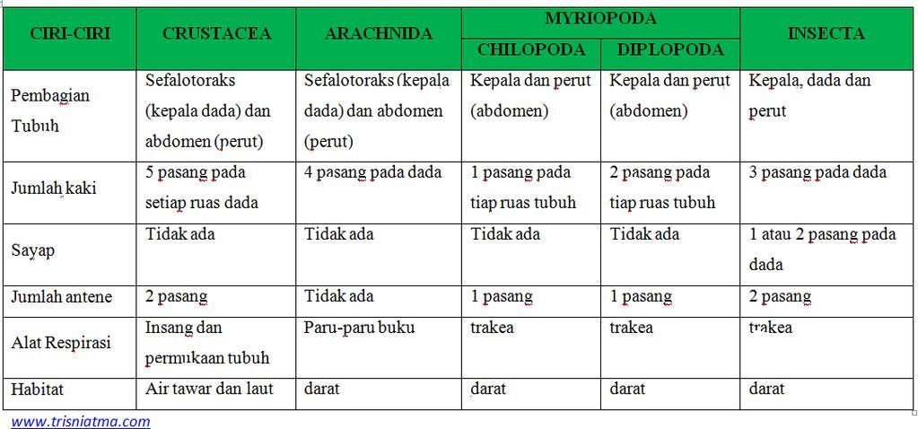 táblázat perbedaan kelas nemathelminthes