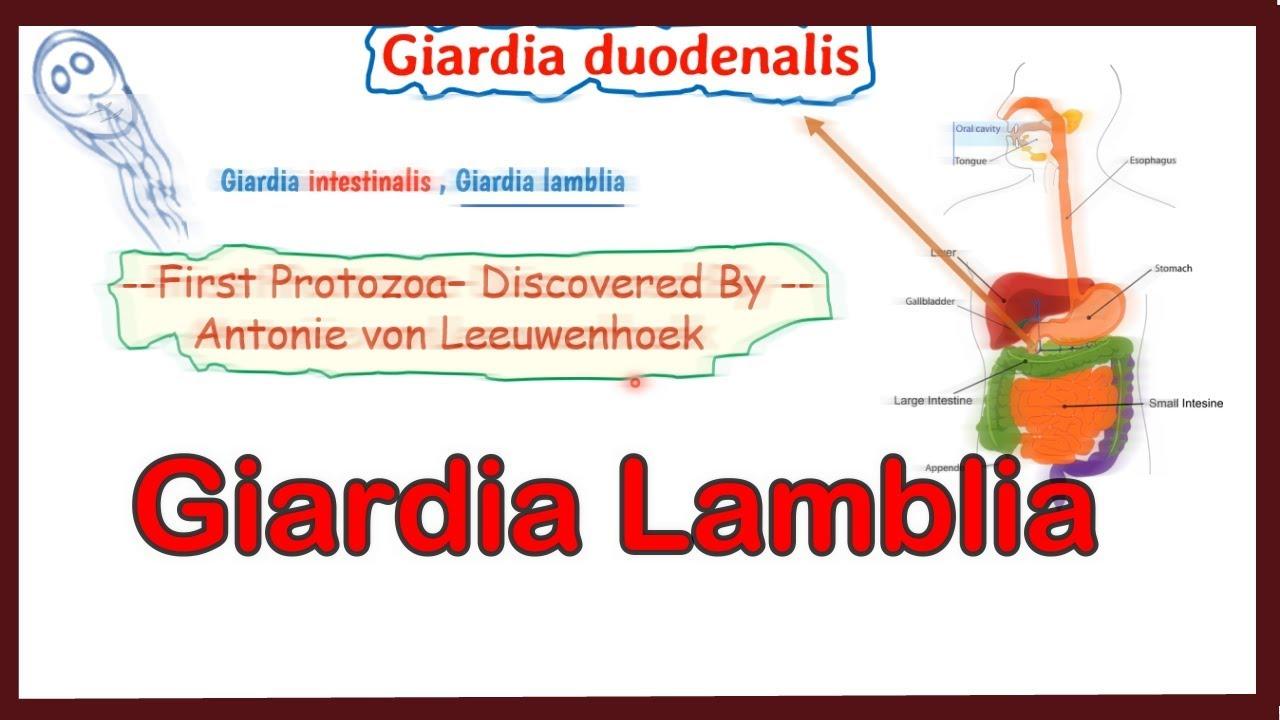 a giardiasis kezelése az egész család számára)