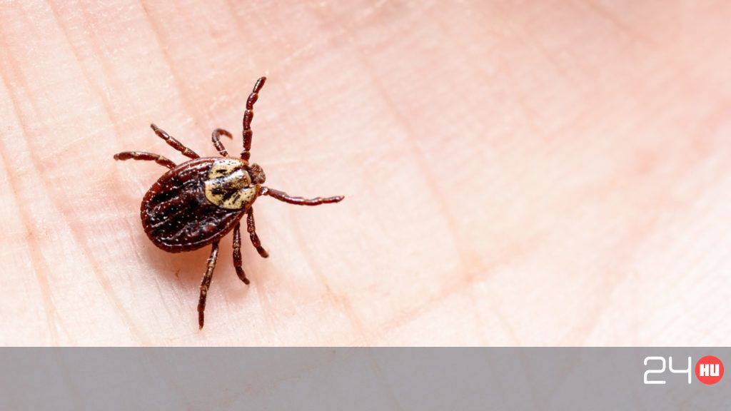 A paraziták kezelésének szakaszai Gyógyszer emberi paraziták ellen