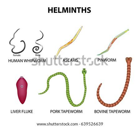 Hogyan lehet megtisztítani a paraziták éter testét ,pinworms, pinworm helminths