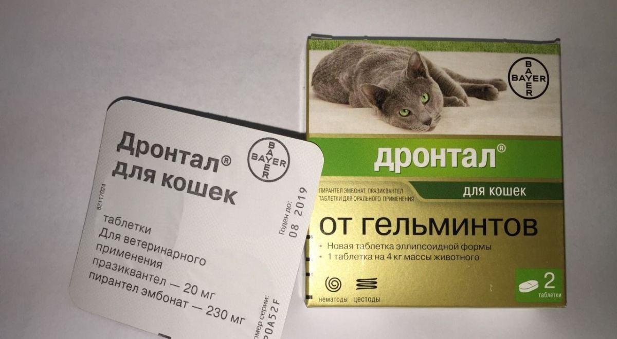 A macskáknak természetes féreghajtó módszert? Melyik az, amely bevált?