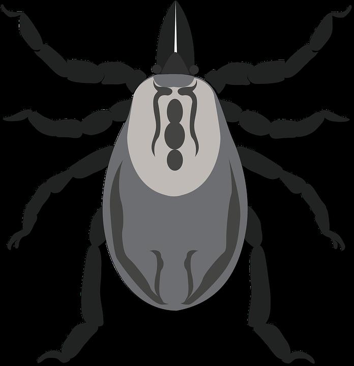 a pinworms betegek