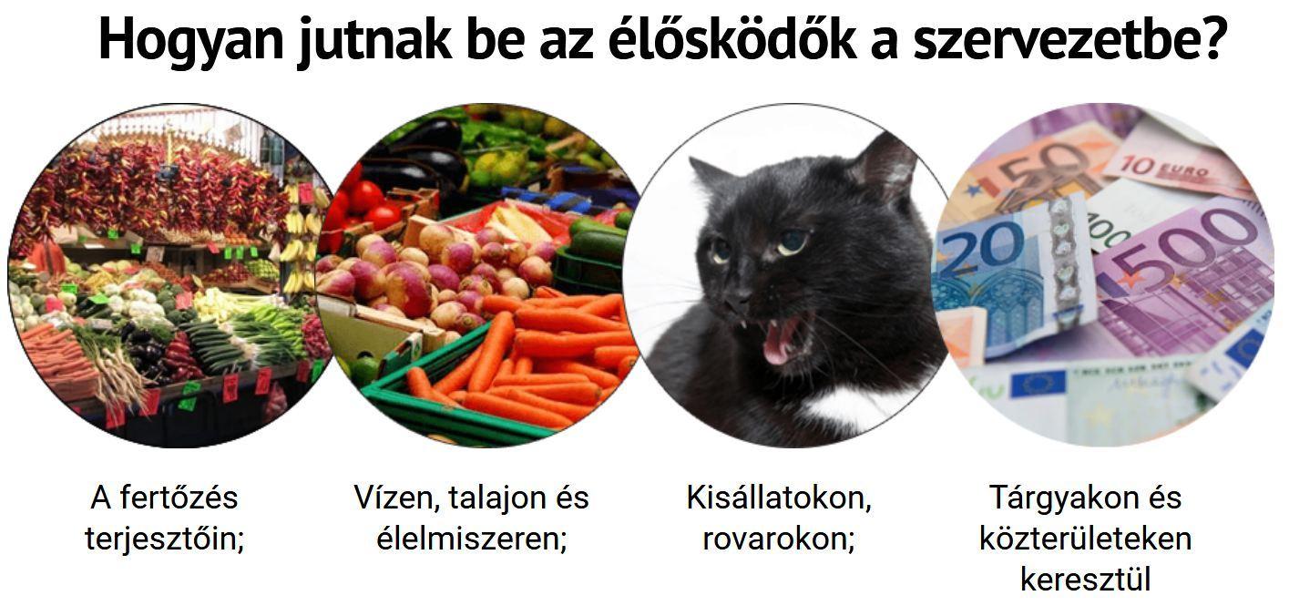 a szaratov paraziták kezelése)