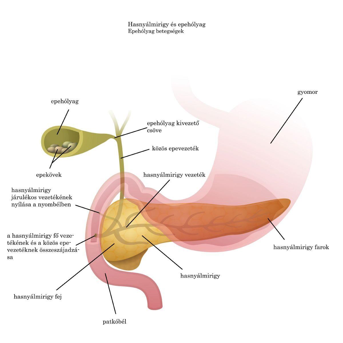 férgek az epehólyag tünetei kezelése)