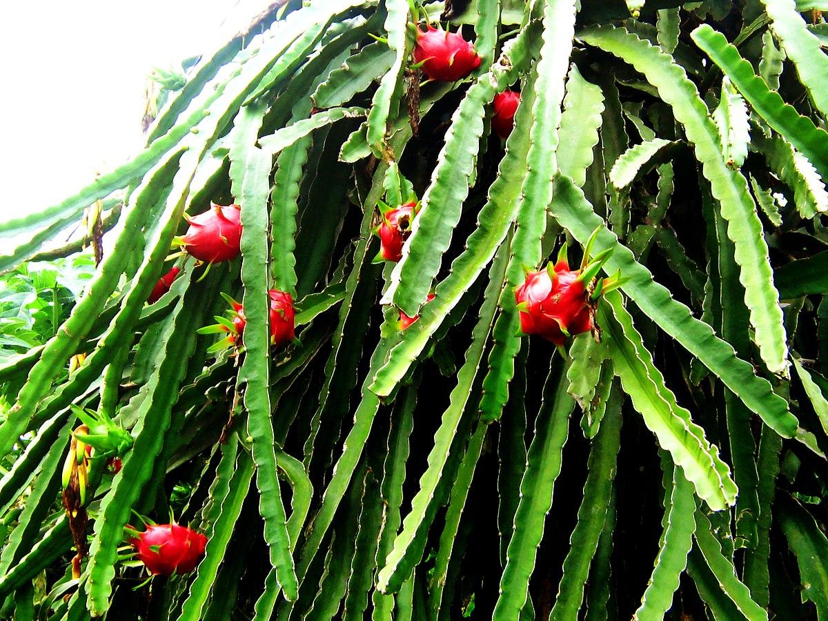 magasabb növényi paraziták)