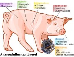 az ektoparaziták tünetei emberben)
