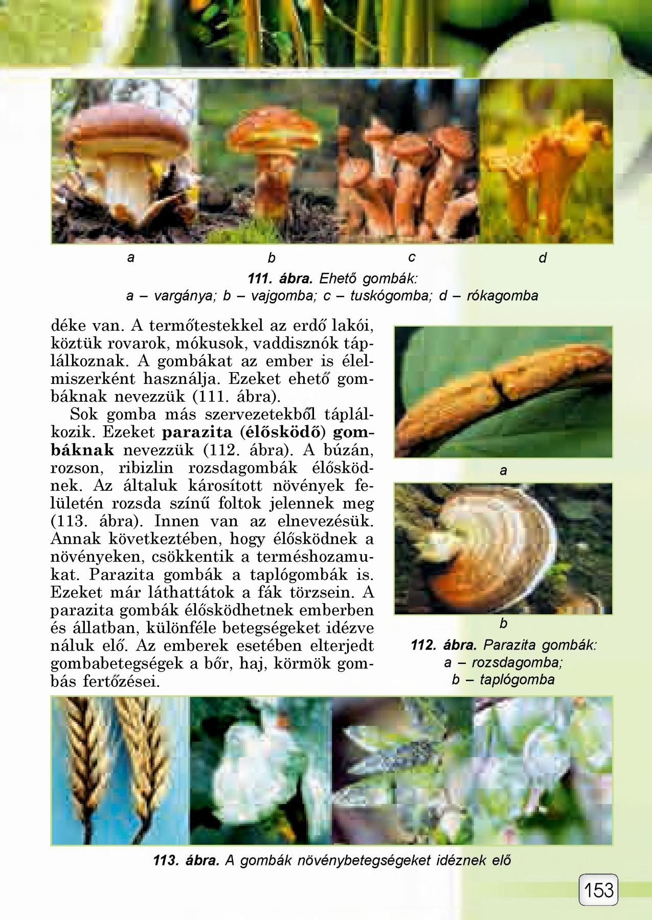 parazita szimbiózis)