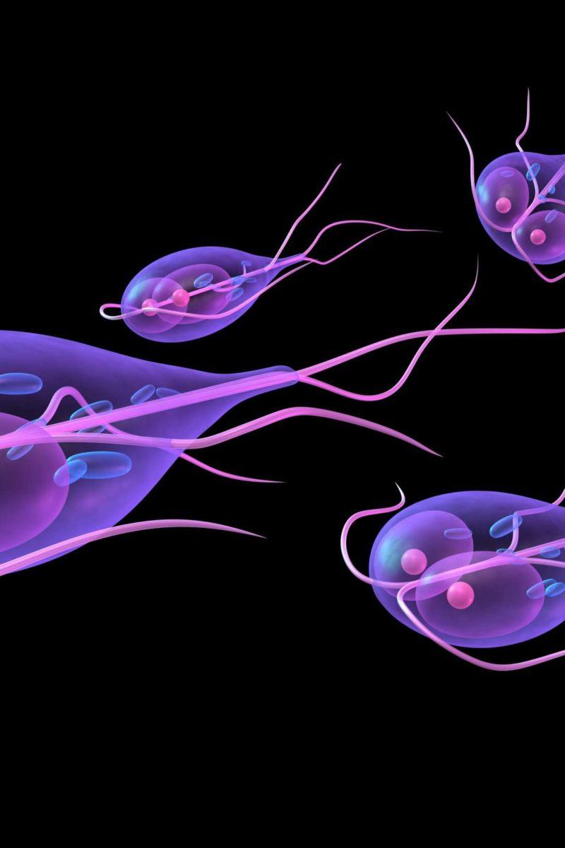 Giardia water disease