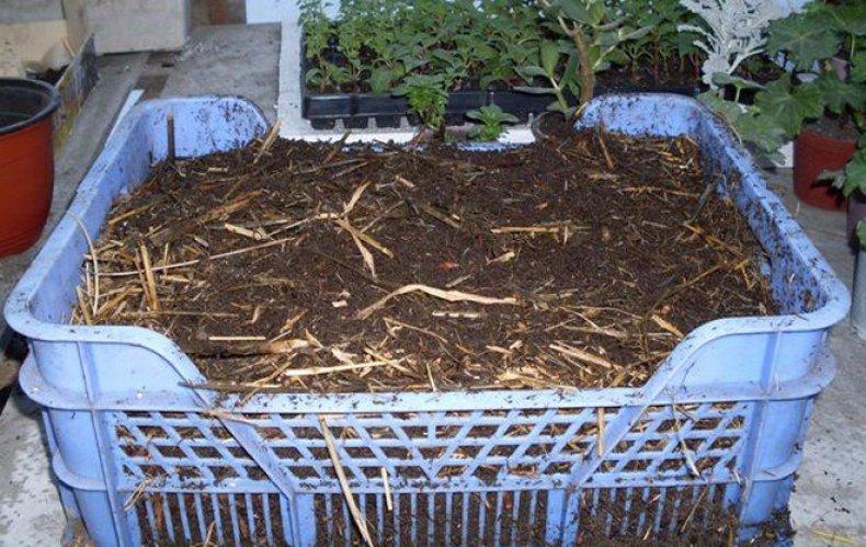 helminták a talajban