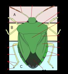 mely helmintáknak van élő és parazita generációja