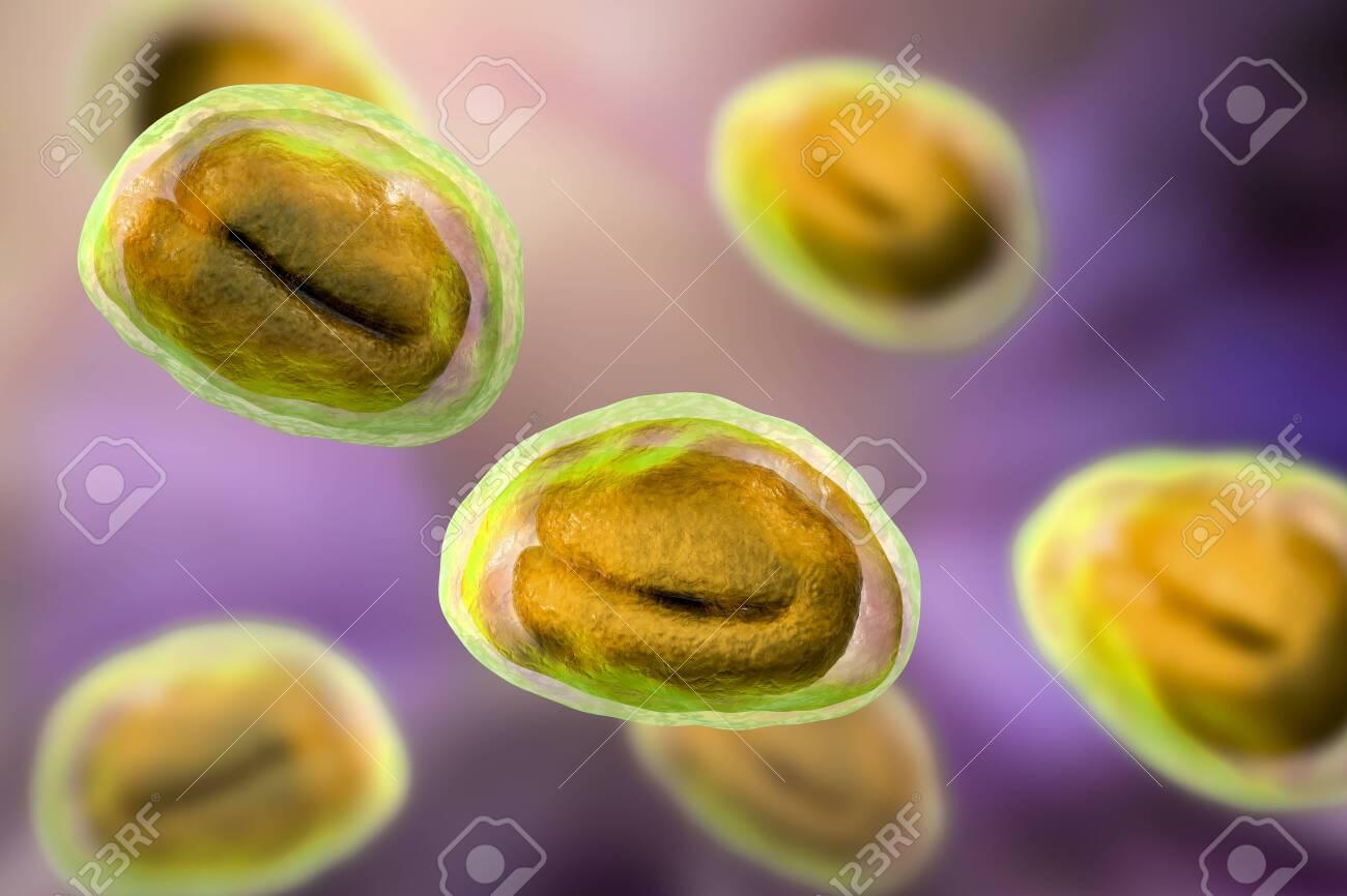 Pinworm tojás, Az emberekben az ostorféreg a