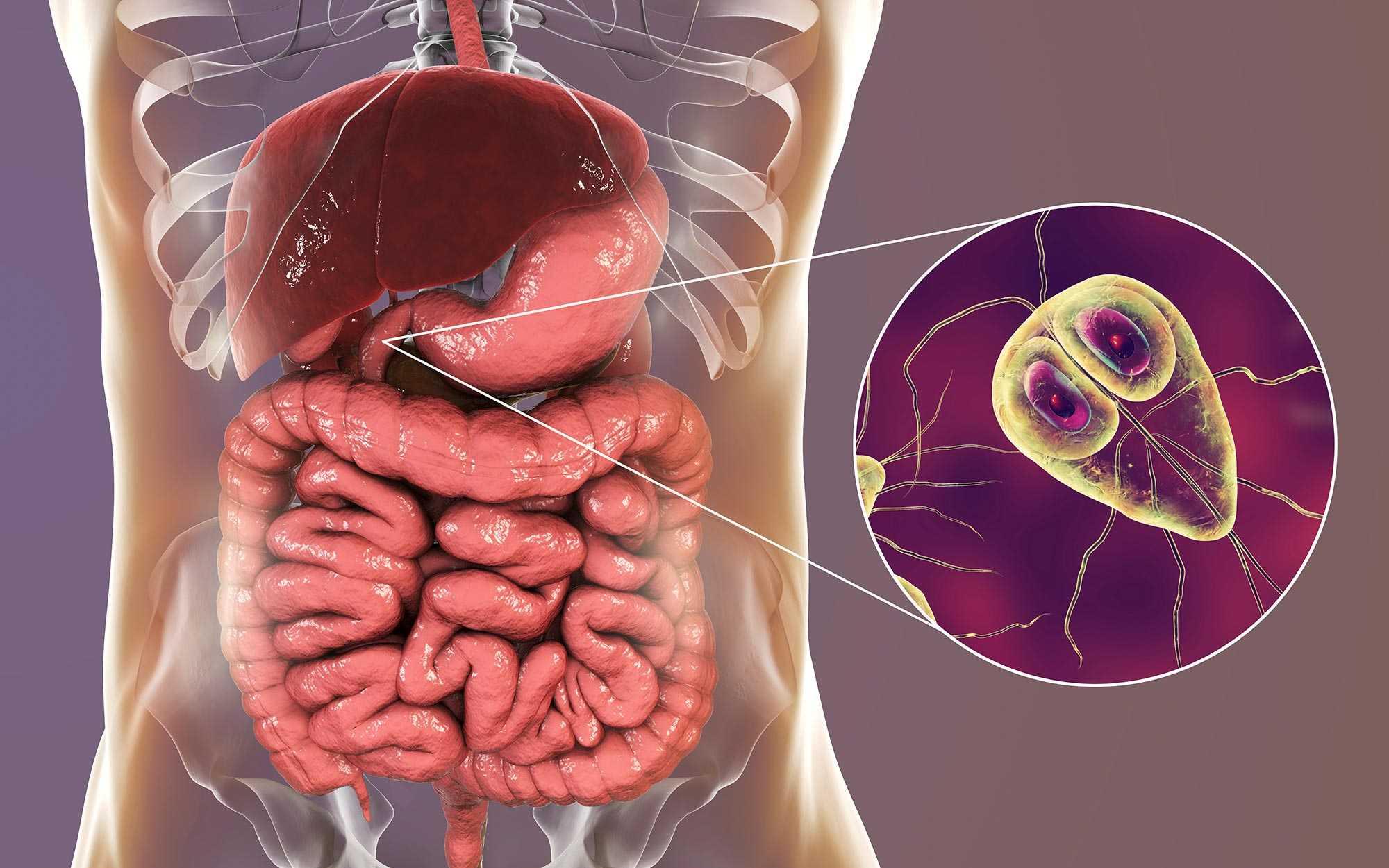 giardia infektion symptome)
