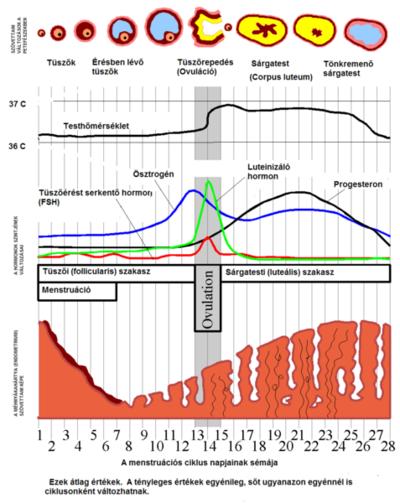a petesejtek kezelése gyermekeknél, időzítés és rendszer)