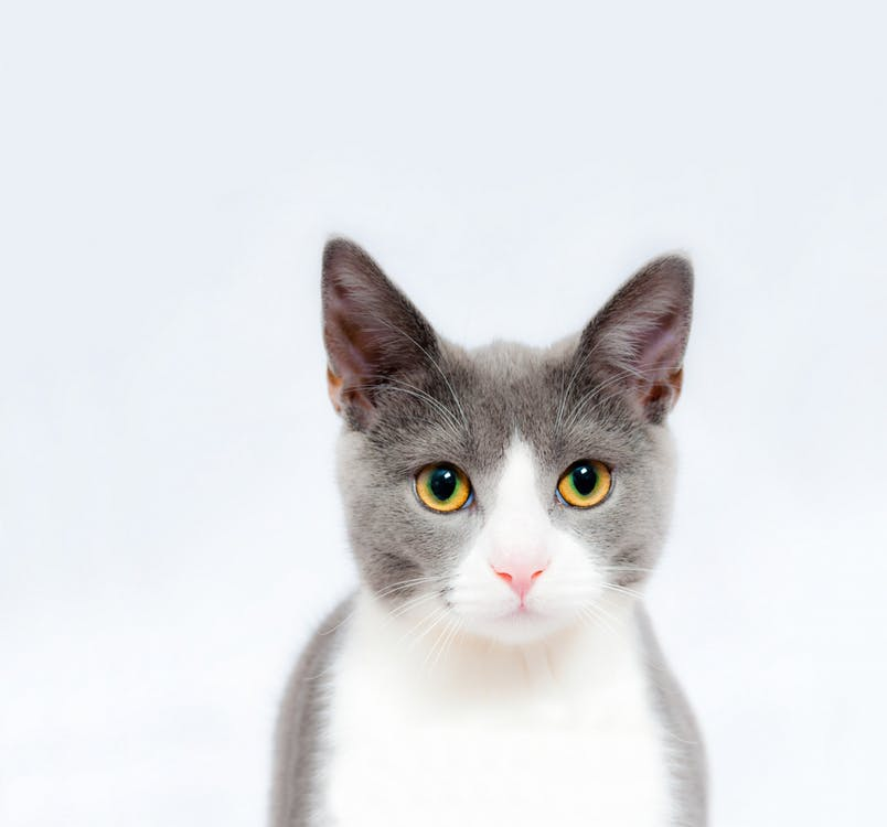 giardia la pisici simptome)