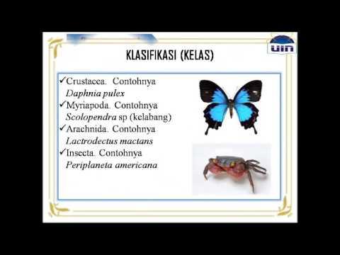 a giardiasis immunstimulánsai)