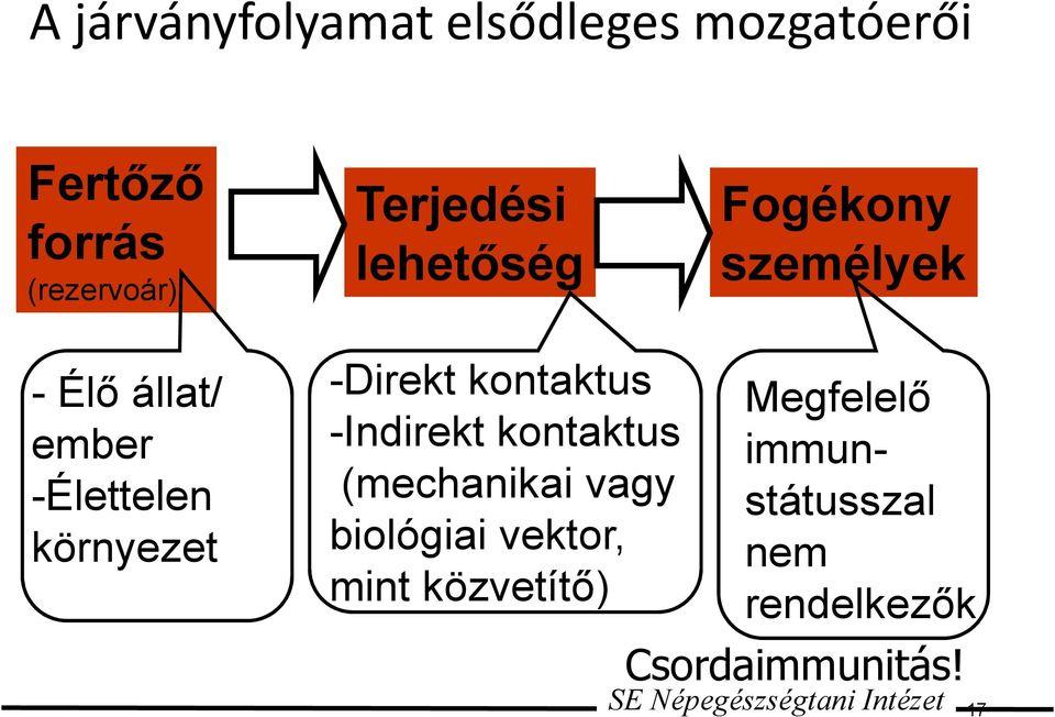 enterobiosis fertőzés forrása)