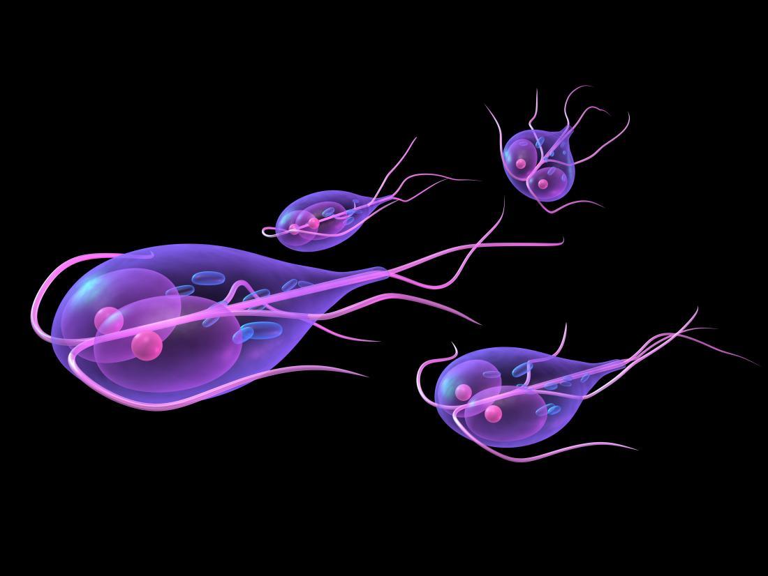 stomach parasite giardia)