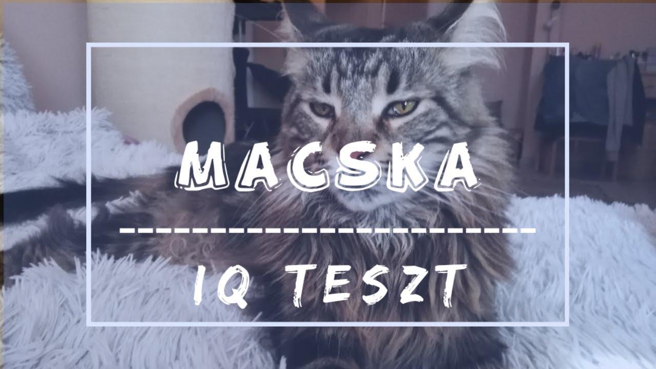 Hasznos tanácsok macskakölyök tartóknak | boszivet