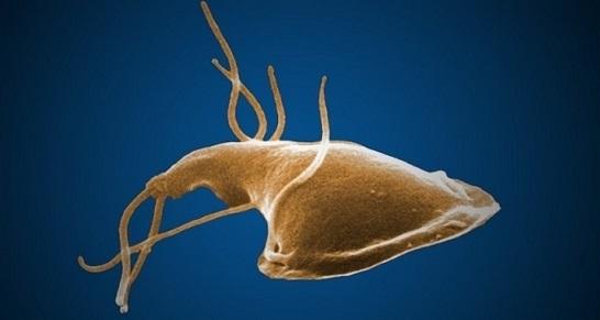 Giardia parasit katze, Giardien bei Katzen 😱 So wirst Du sie los! helmint kezelési program