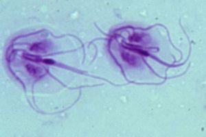 giardia infectie bij de mens